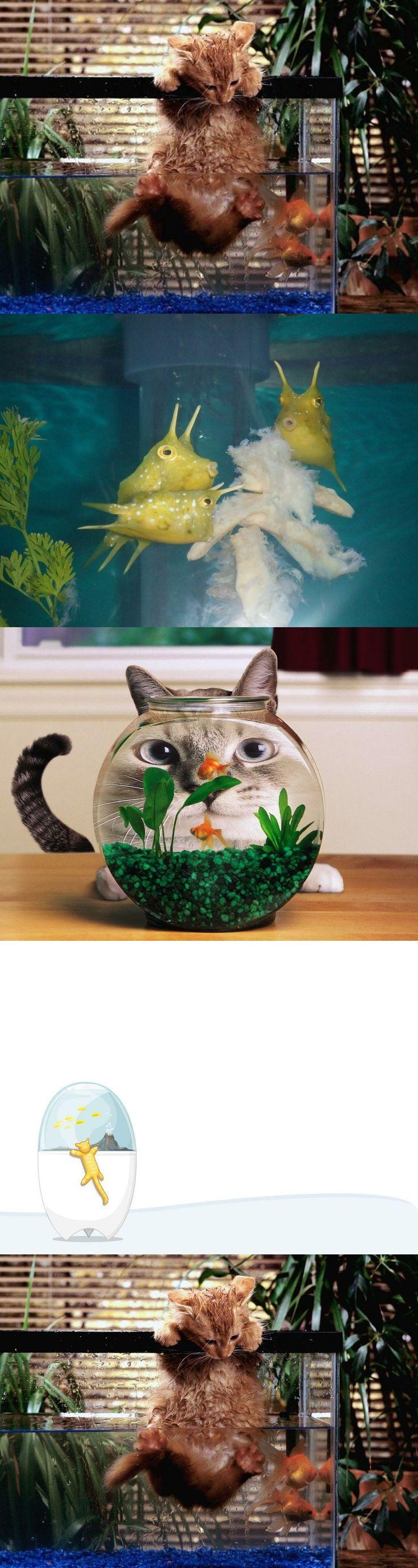 8444078afb729f69a3dde57d5d6f735a--aquarium-fish-hunting Frais De Fabriquer Aquarium Concept