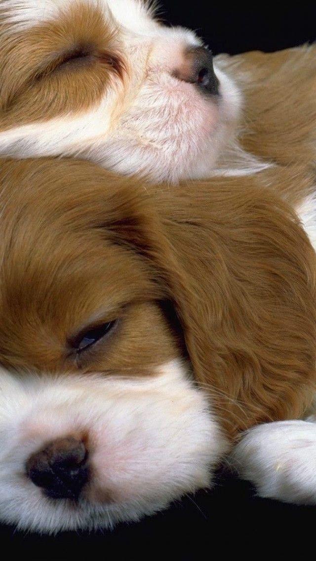 5 Sweet new born puppies sleeping..