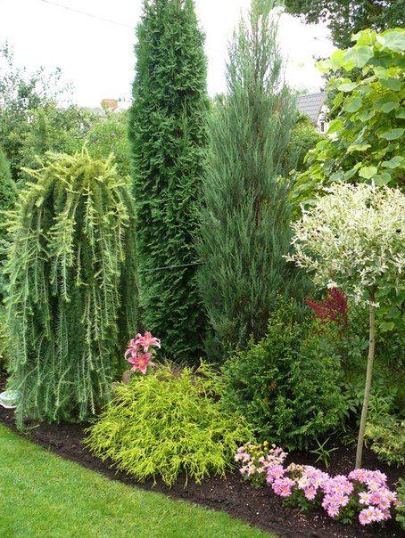Мой сад - 2012 | 60 фотографий  Beautiful conifer / shrub / tree / plant combinations and landscape designs