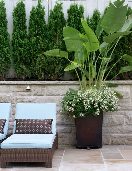 Woven rattan patio loungers with fresh blue cushions offer comfort while lush greenery provides serene views.