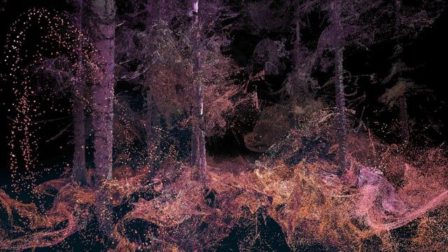 This new commission enables audiences to encounter England's forests anew through an immersive virtual reality experience, told by the inhabitants of the forest. A 360º film, it is an artistic interpretation of the sensory perspectives of three species natural to the site.