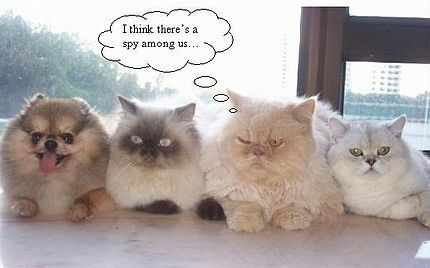 funny cats cats: Funnies Dogs, Funnies Animal, Animal Pictures, Funnies Pictures, Funnies Cats Photo, Dogs Funnies, Studios Apartment, Pomeranians, Funnies Images