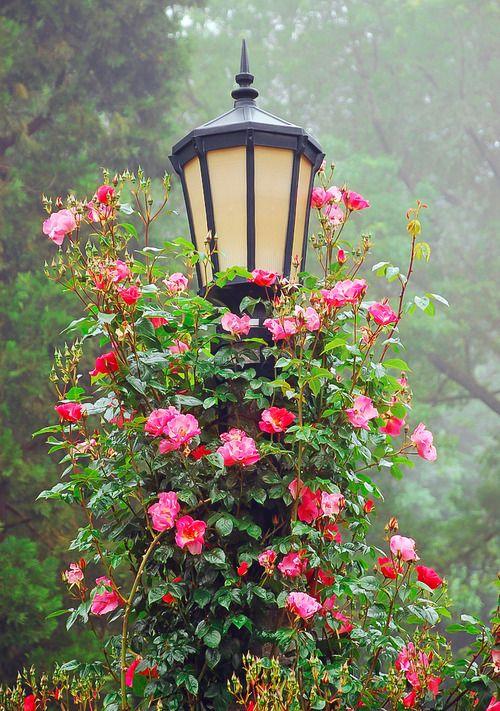 loveliegreenie | syflove:   romantic lantern