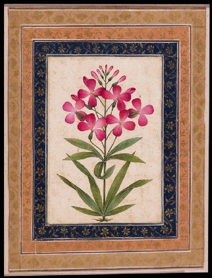 Style: Mughal; Type: Elephants, birds, and flowers; Title: 'Botanical study of a geranium', north India, c. 1630