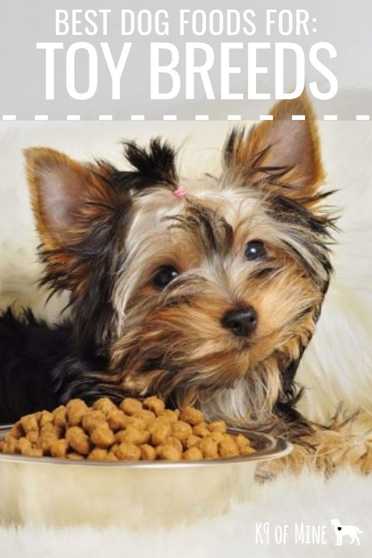 5 Best Dog Foods For Toy Breeds 2020 Top Nutrition For Tiny