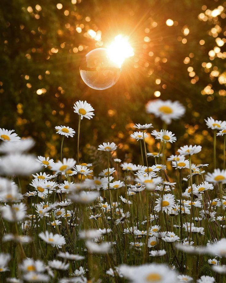Фото лето цветы и солнце