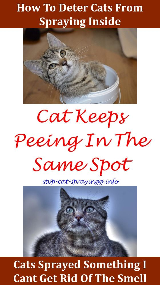 How To Keep Male Cats From Spraying Outside
