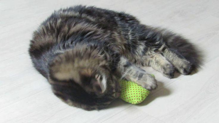 Toys for cats Hračky pro kočky