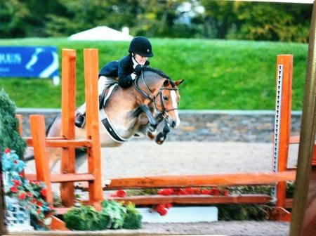 Dream pony! Coconut Creek - Welsh Cross - Hunter