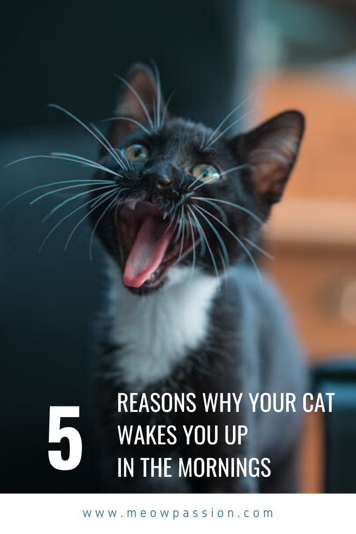 Steps To Stop A Cat From Waking You Up In The Mornings Meowpassion Cats Morning Cat Kitten Meowing