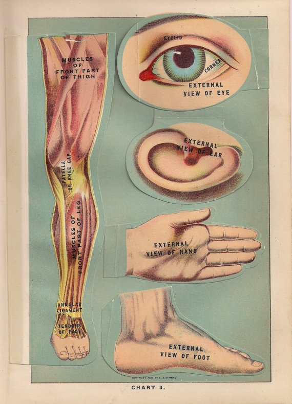 8 best medical charts images on Pinterest Charts, Anatomy and - medical charts