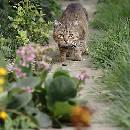 How to Get Rid of Feral Cats Cat Removal Feral cats