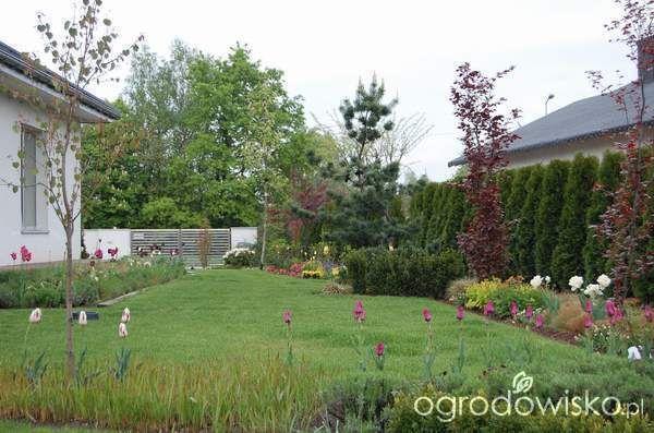 Ogród zmyślony - strona 195 - Forum ogrodnicze - Ogrodowisko