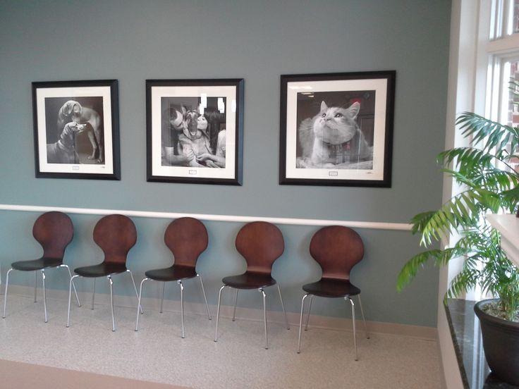 Office Pet Ideas - INTERIOR DESIGNS IDEAS - Aprivateaffair.us