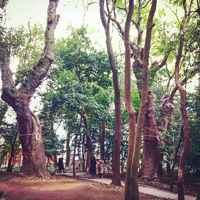 【ichirock0919】さんのInstagramをピンしています。 《生田神社の境内の北側にある生田の森。かつて源平合戦の舞台にもなったこの鎮守の森がなかなかのパワースポット 🌳🌳🙏 #生田神社 #生田の森 #縁結び #パワースポット #木 #森 #源平合戦 #緑 #三宮 #神戸 #shrine #forest #woods #tree #green #kobe #japan #おっさんぽ》