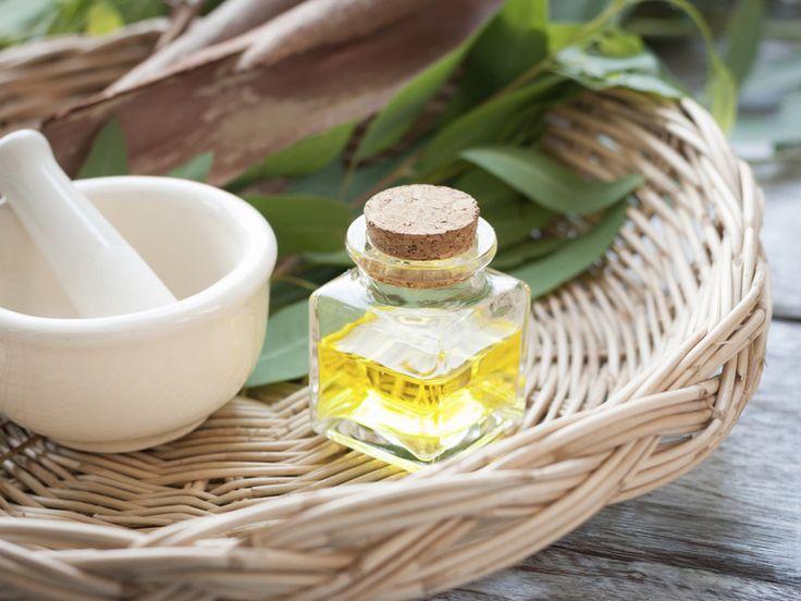 Teebaumöl: die Beauty-Geheimwaffe gegen Pickel, Haarausfall & Co.
