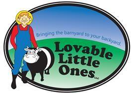 Miniature Cows for Sale   Mini Cow For Sale   Lovable Little Ones - Loveland, CO