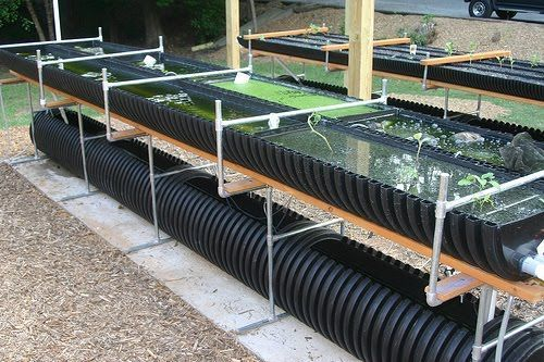 Trays and reservoirs made out of black drainage pipe. #AquaponicsTips