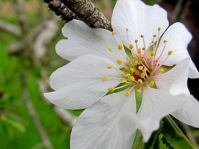 Il fiore della rinascita e del Coraggio   Samudaya