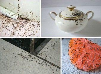 Как избавиться от муравьёв дома