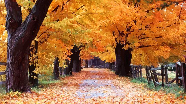 Autumn Windows XP wallpaper Desktop wallpaper fall