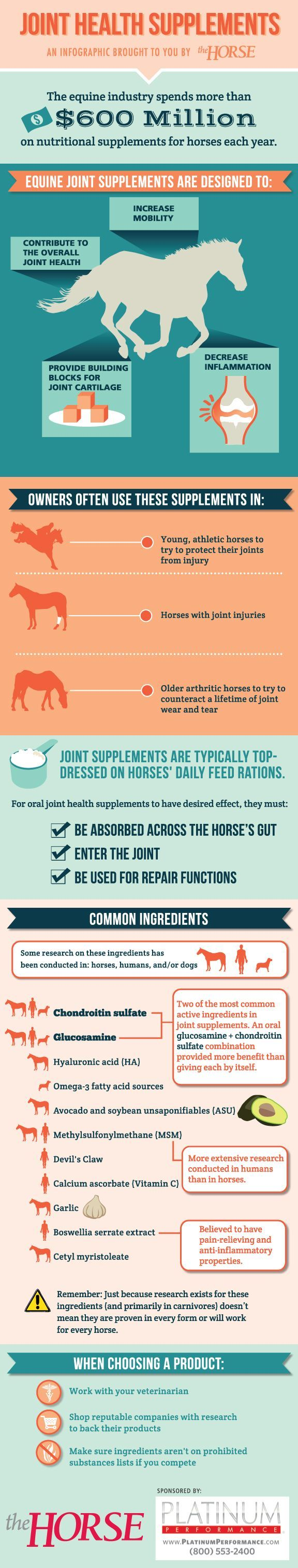 [INFOGRAPHIC] Equine Joint Health Supplements - http://TheHorse.com | Learn about equine joint supplements and what might help your horse in our easy-to-follow visual guide. Brought to you by http://TheHorse.com and @Susan Brown Performance #infographic #horsehealth #supplements #joints