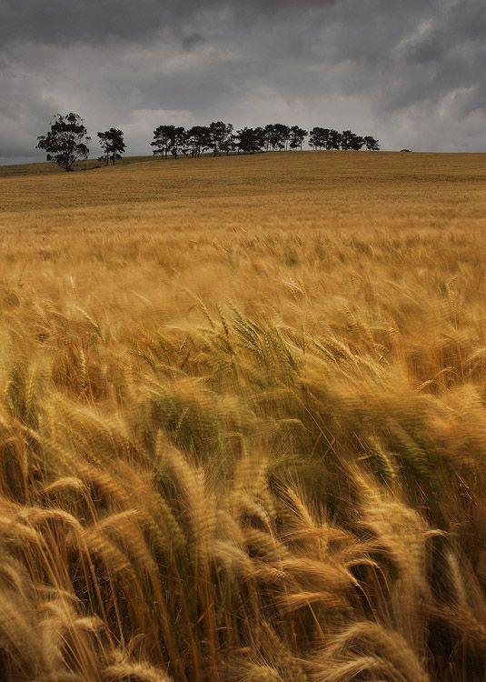 Wheat Swirls, Western Cape, South Africa