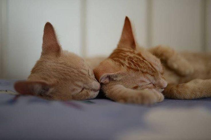 voglia di tenerezza  #lovecats #cat #cats #catsagram #catstagram #instagood #kitten #kitty #kittens #pet #pets #animal #animals #petstagram #petsagram #photooftheday #catsofinstagram #ilovemycat #instagramcats #nature #catoftheday #lovecats #furry #sleepi