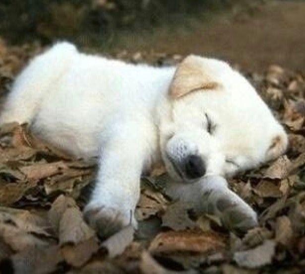 nap attacks !