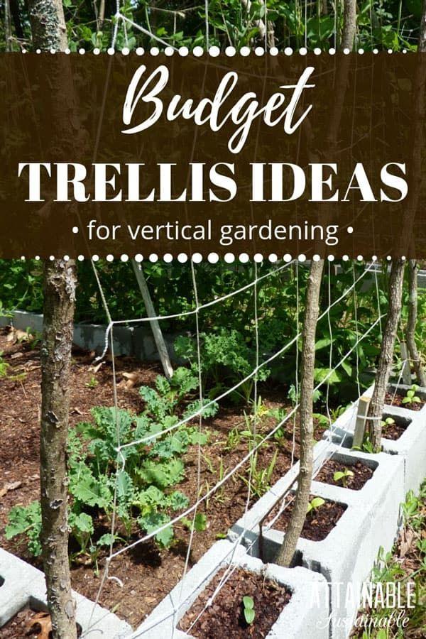 Diy Trellis Ideas For Growing A Vertical Garden On A Budget In