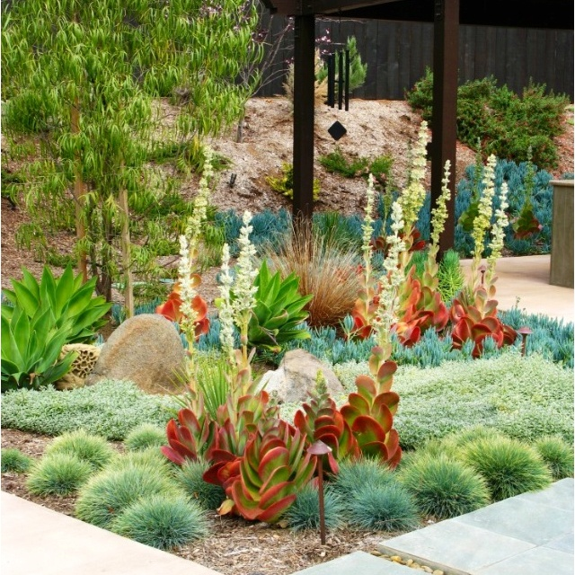 Backyard Waterfall With Dry Creek Bed moreover Index intro to la besides 71776187783308152 moreover 314829830177843989 besides . on california drought resistant landscaping ideas