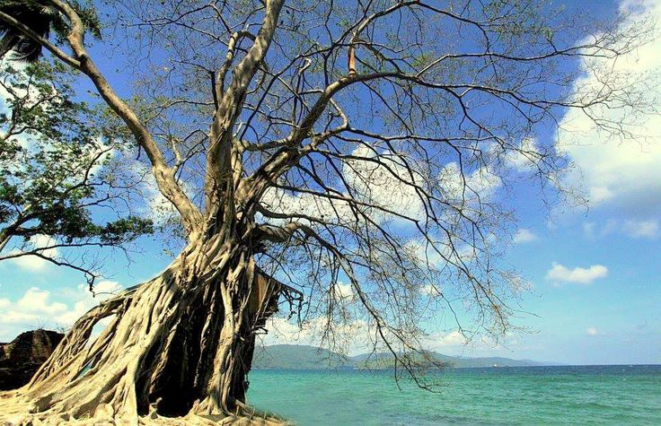 Avail a private day tour to an island on a boat.The trip is planned ideally for both Couples and Groups catering to privacy required for a couple and also the fun required for a group.Visit the First Administrative Capital of the Britishers at the Andaman and Nicobar Islands, the Ross Island.Ross Island once glittered with all modern amenities and was packed with beautiful buildings and government institutions before an earthquake hit the island. Since then this island could never recover…
