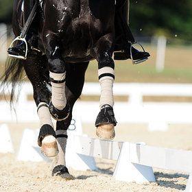 equestrian equine cheval pferde caballo | black dressage feet cantering || cheval noir