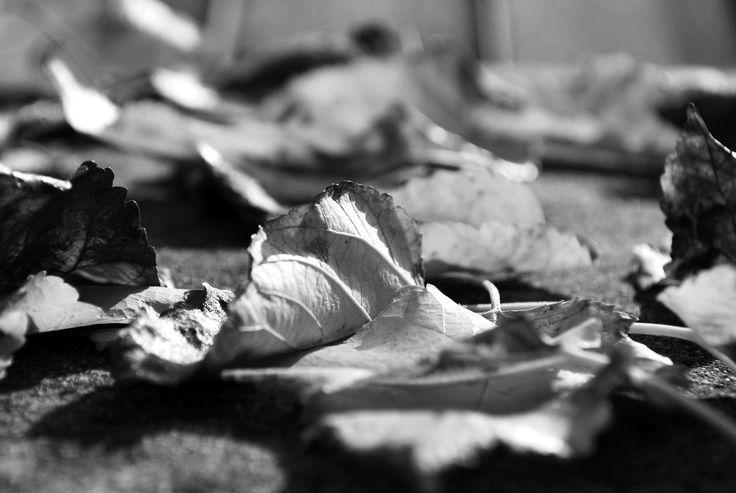 leaf-blur-leaves-ground.jpg (1280×859)