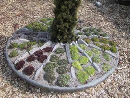 rotsplanten toepassing 19