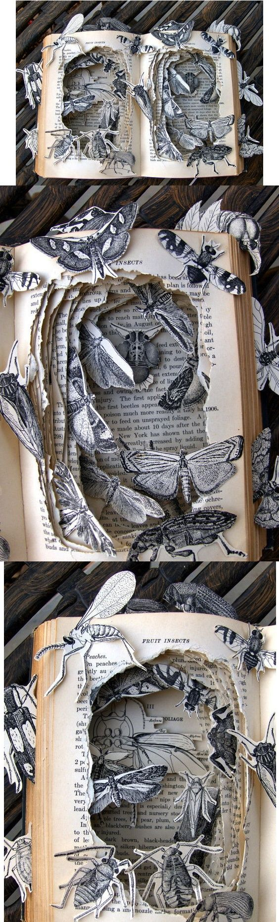 Kelly Campbell, Mayberry's Insects, art, sculpture, paper craft, book art, book sculpture