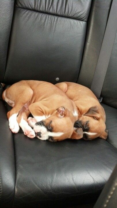 Jax & Opie....my cute little boxer puppies!!! <3