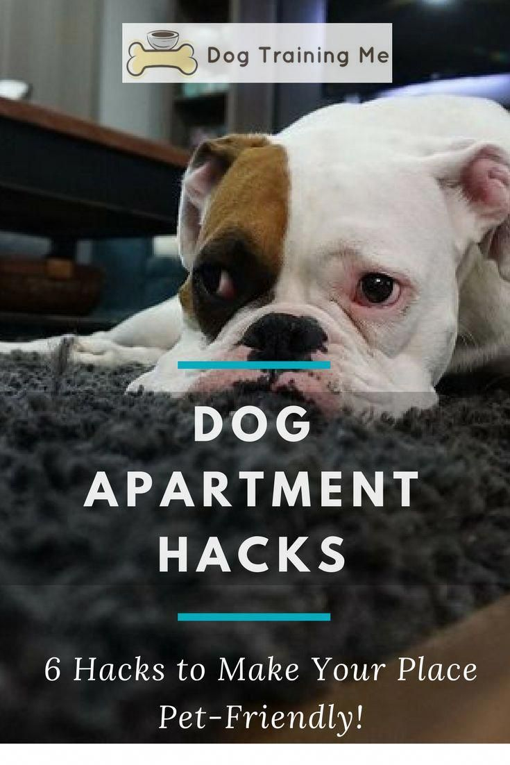 Dog Apartment Hacks: Make Your Place Pet-Friendly! | Outdoor
