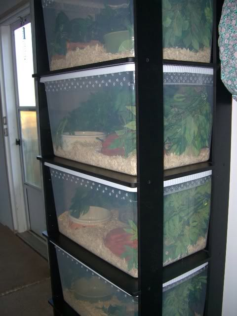 I love this rack! Most people don't even bother with plants in racks, but it's a nice touch!