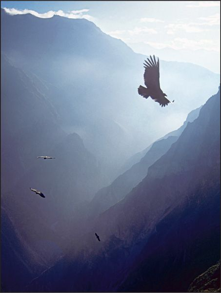Colca Canyon, Arequipa, Peru; like Grand Canyon of the Colorado River, Arizona; Hells Canyon of the Snake River, Oregon/Idaho; Copper Canyon, Chihuahua, Mexico