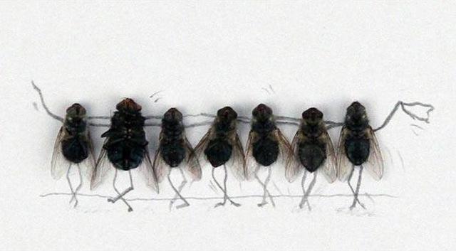 10 необычных способов избавиться от мух.