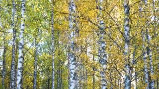 sibelius karelia suite - YouTube