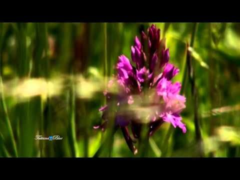 Giovanni Marradi - Forever Beautiful - YouTube