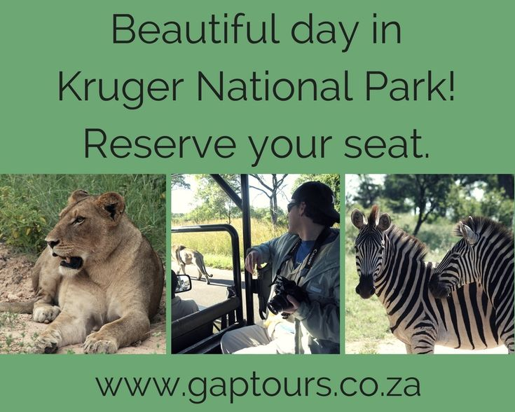 Beautiful day in Kruger National Park! Reserve your seat. Contact our office reservations: Info@gaptours.co.za http://www.gaptours.co.za