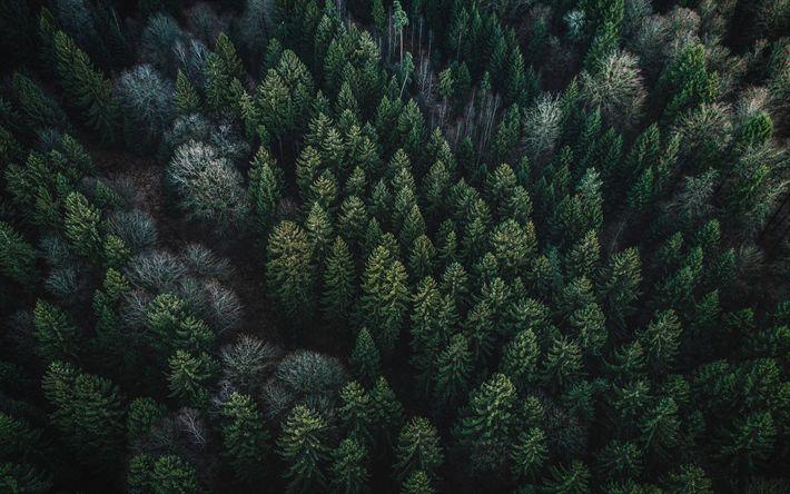 Descargar fondos de pantalla verde bosque, bosques de coníferas, vista desde arriba, las copas de los árboles, estados UNIDOS, un denso bosque