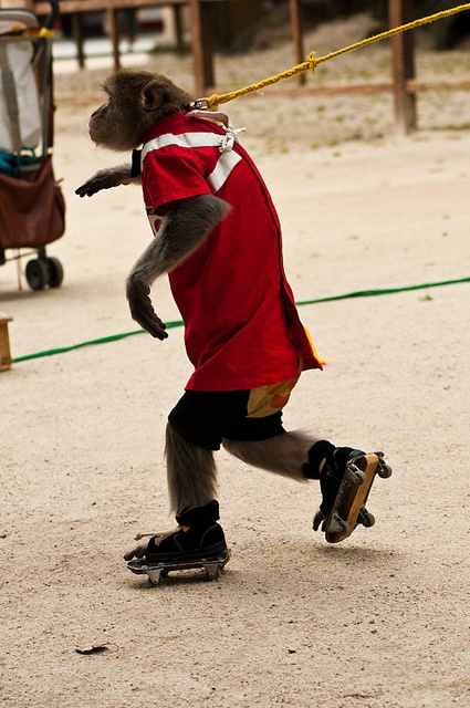 120 Best Animals On Skates Images On Pinterest Roller