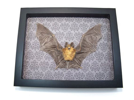 Bat Taxidermy for Sale Taxidermied Animals by bonejewelry on Etsy, $69.99