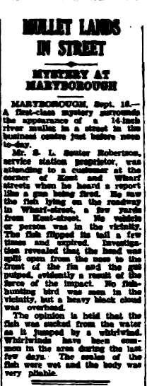 14 inch river mullet lands in street at corner of Kent and Wharf Streets. Opinion thinks it was sucked from the water by a whirlwind. 18 September 1953 Cairns Post - Trove