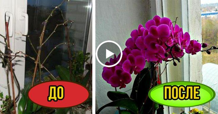 7 ВАЖНЫХ СЕКРЕТОВ ухода за орхидеями. И Ваша орхидея будет цвести круглый год