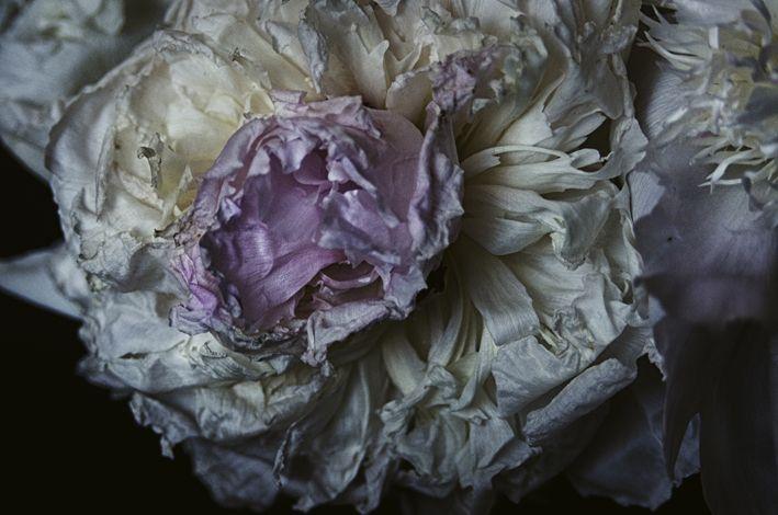 Vegati | Lara Kiosses